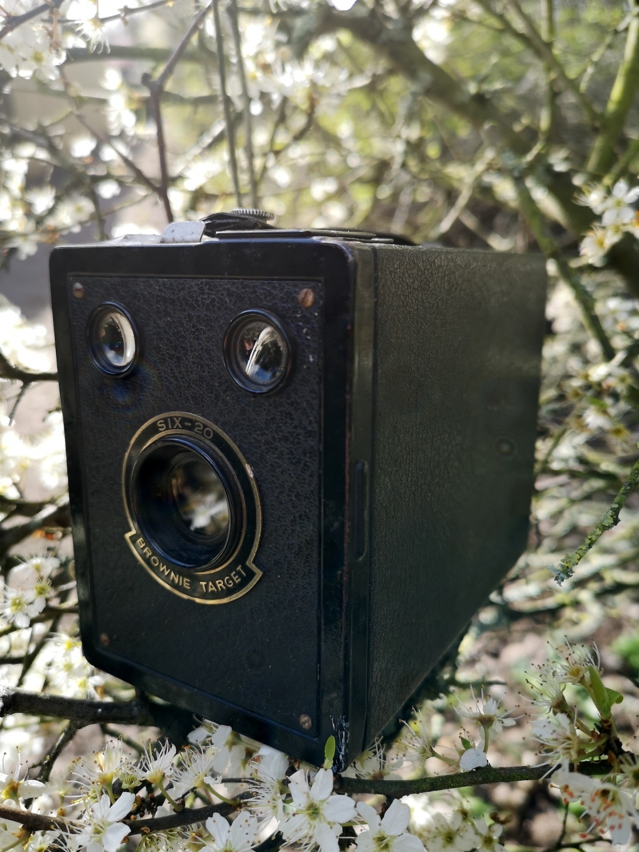 Kodak Six-20 BrownieTarget
