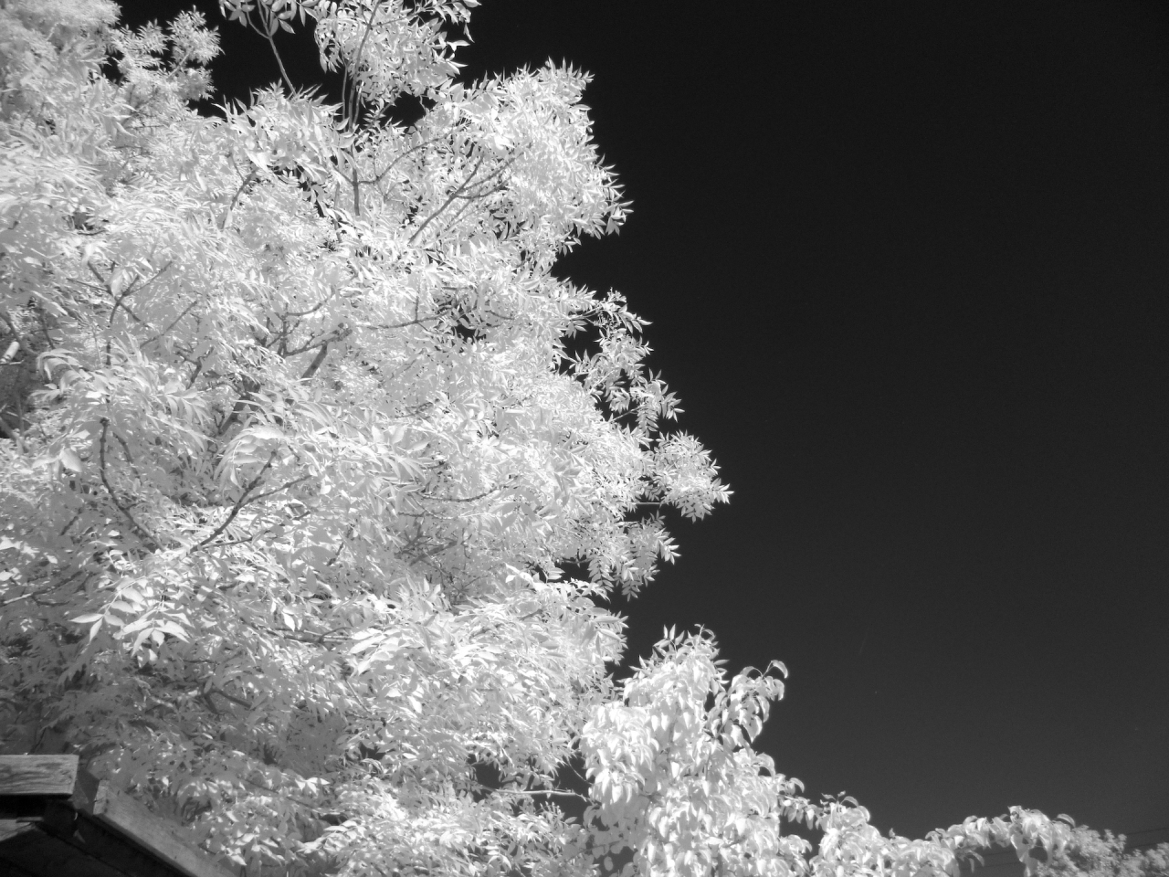 Infrared Conversion of Panasonic Digital Camera